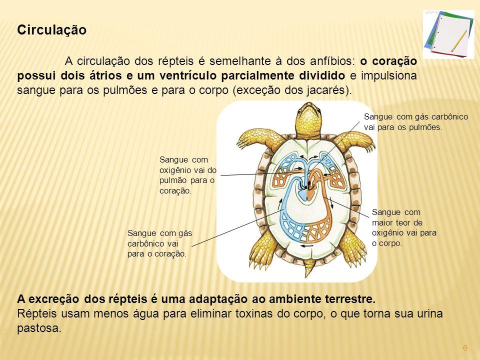A reprodução dos répteis Dentro do ovo, o embrião fica protegido contra a desidratação.