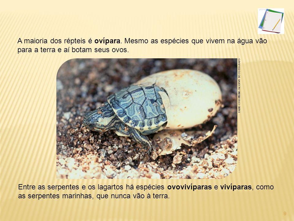 Os grupos de répteis Quelônios Grupo das tartarugas, jabutis e cágados.