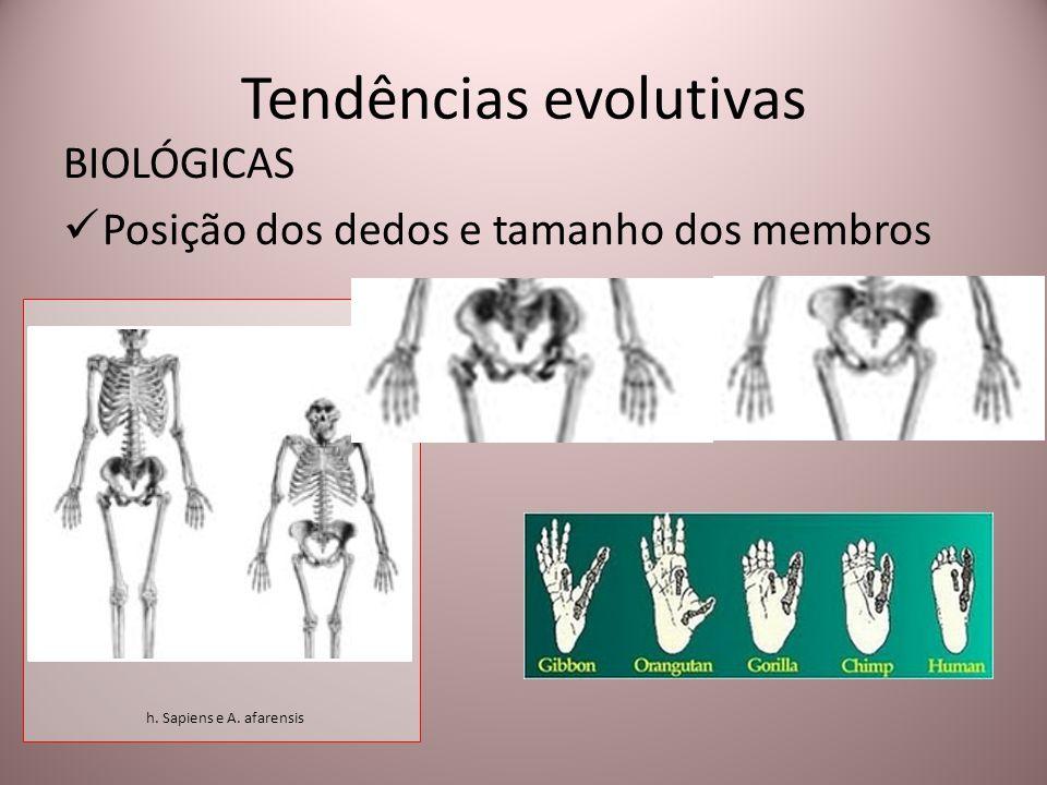 Tendências evolutivas BIOLÓGICAS Posição dos dedos e tamanho dos membros h. Sapiens e A. afarensis