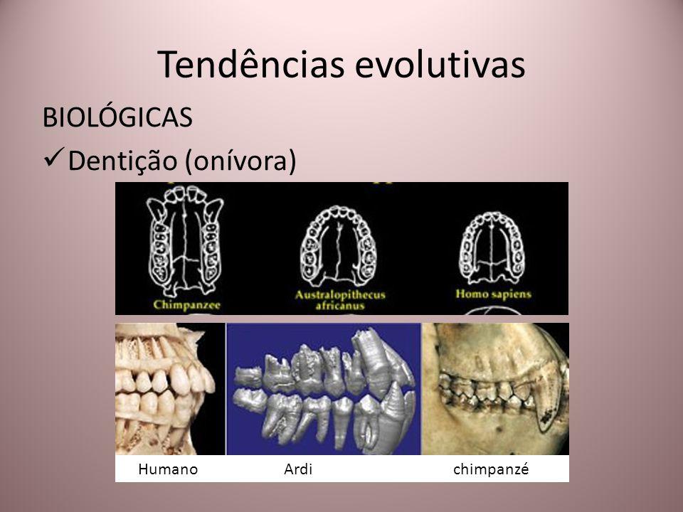 Tendências evolutivas BIOLÓGICAS Dentição (onívora) Humano Ardi chimpanzé