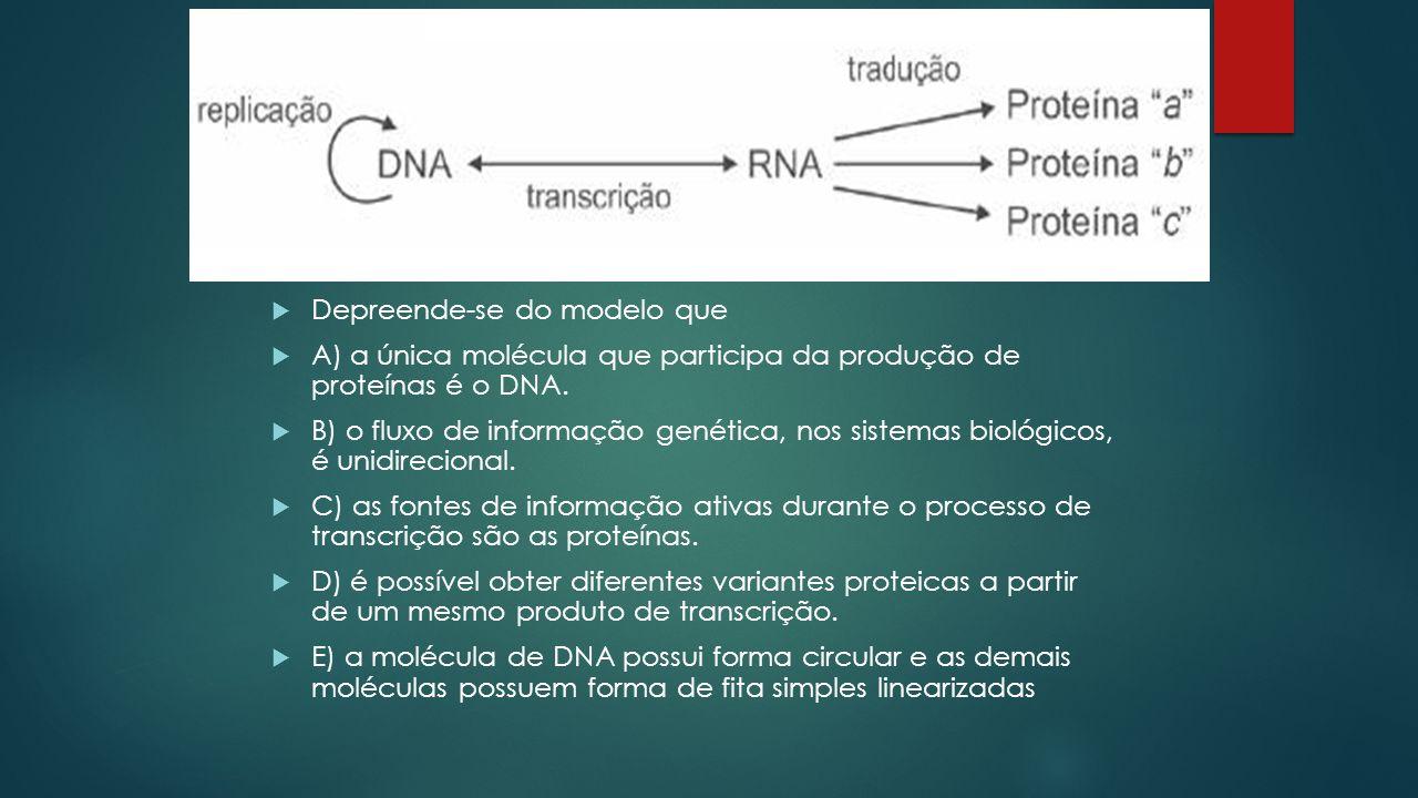  02. ENEM 2010  A figura seguinte representa um modelo de transmissão da informação genética nos sistemas biológicos. No fim do processo, que inclui