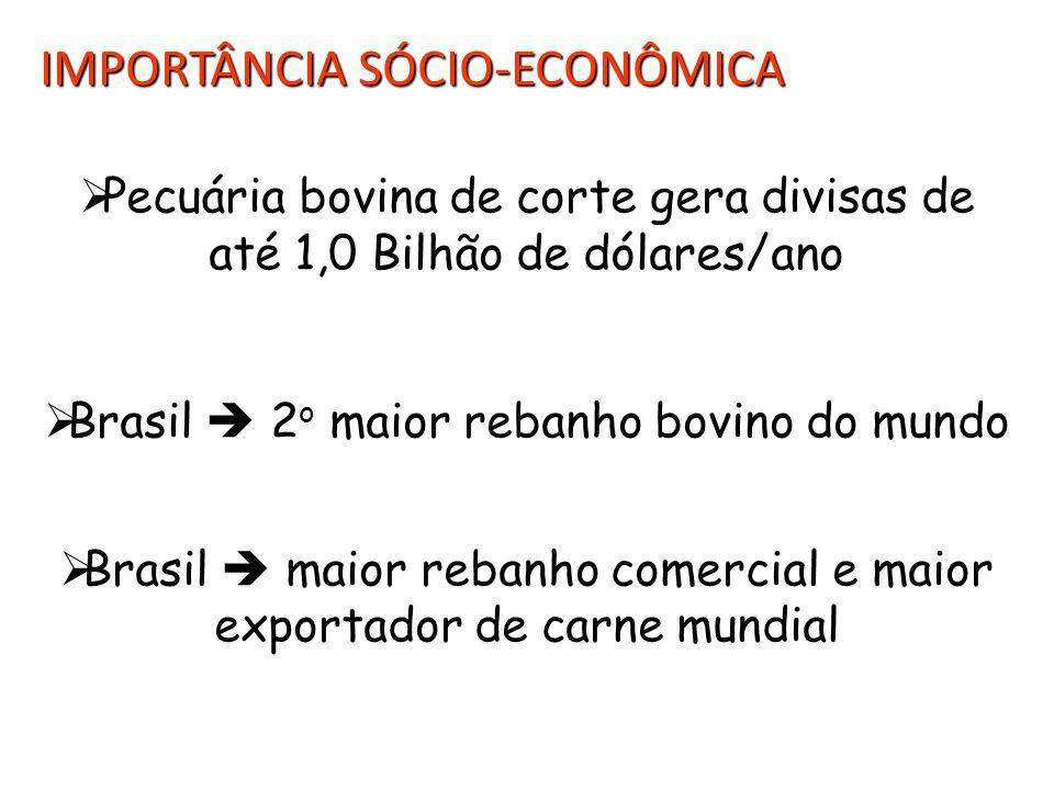 IMPORTÂNCIA SÓCIO-ECONÔMICA  Pecuária bovina de corte gera divisas de até 1,0 Bilhão de dólares/ano  Brasil  2 o maior rebanho bovino do mundo  Brasil  maior rebanho comercial e maior exportador de carne mundial