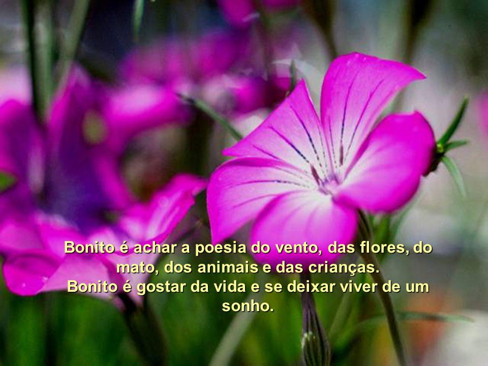 Bonito é achar a poesia do vento, das flores, do mato, dos animais e das crianças.