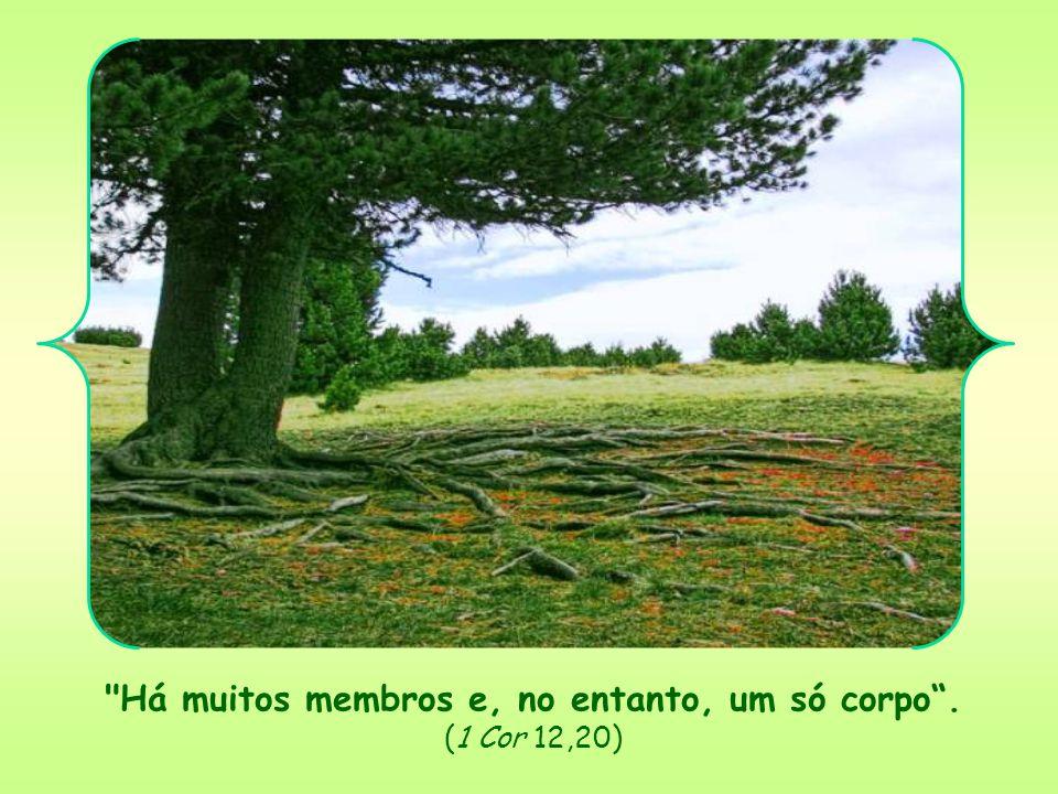 Há muitos membros e, no entanto, um só corpo . (1 Cor 12,20)