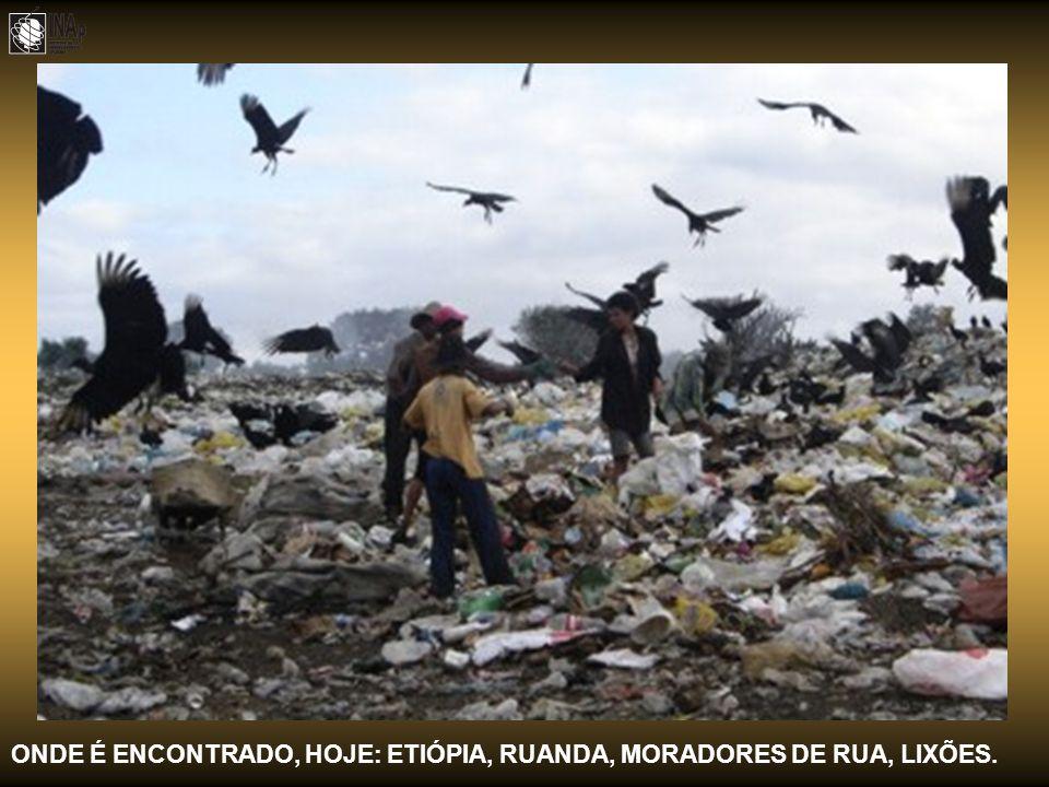 ONDE É ENCONTRADO, HOJE: ETIÓPIA, RUANDA, MORADORES DE RUA, LIXÕES.