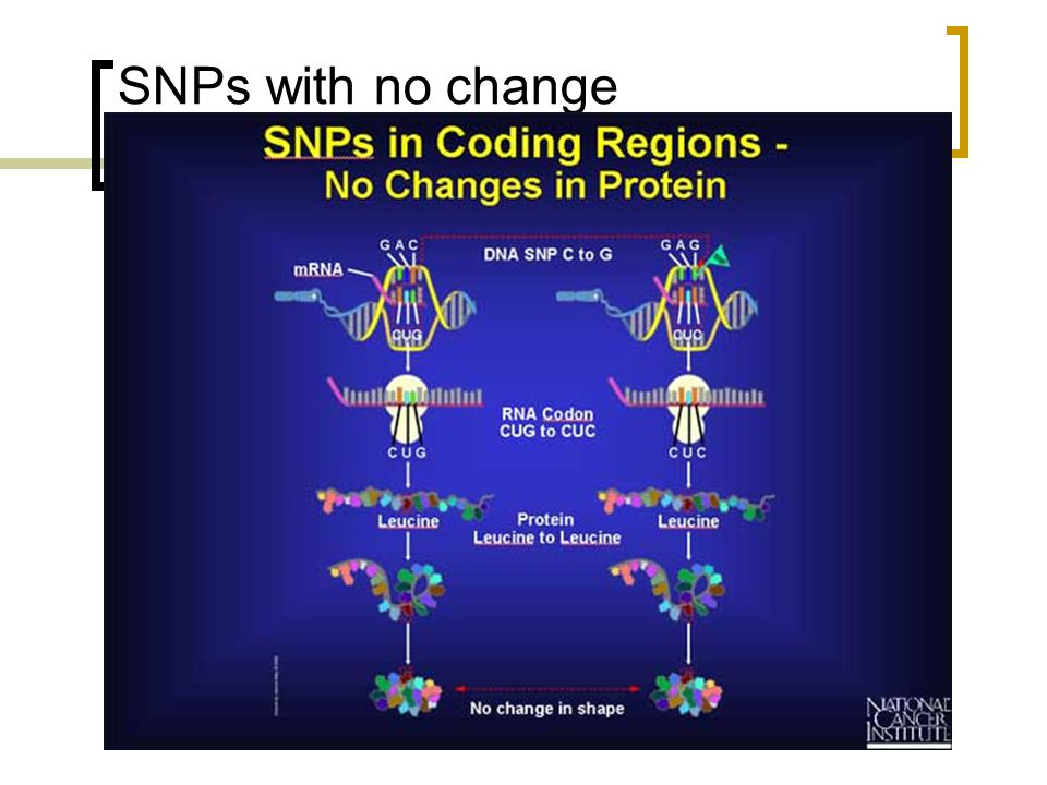 SNPs with no change