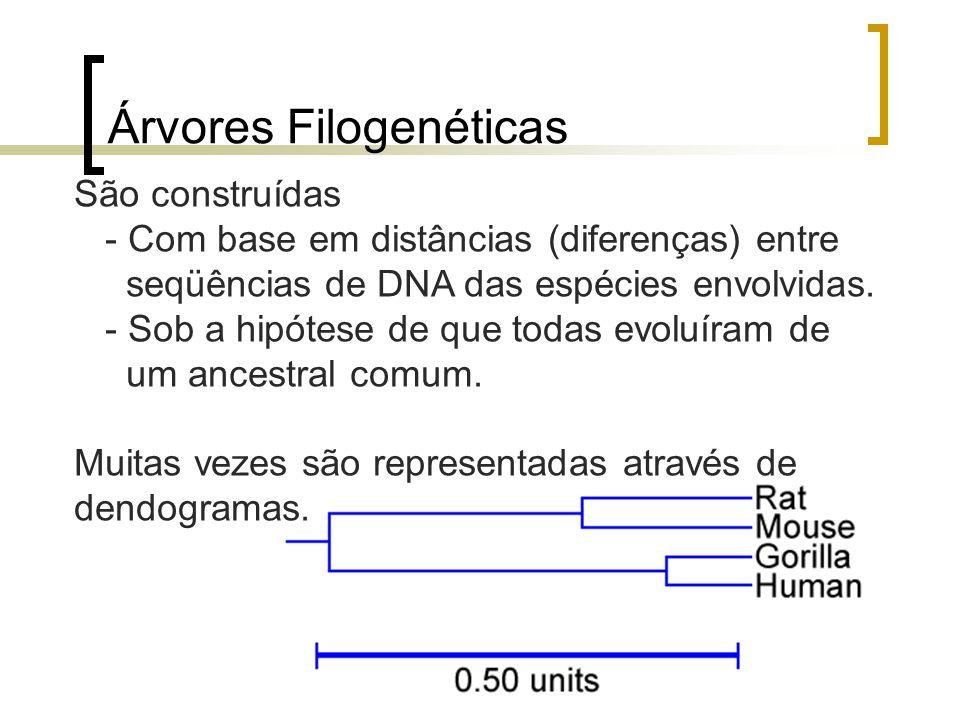 Árvores Filogenéticas São construídas - Com base em distâncias (diferenças) entre seqüências de DNA das espécies envolvidas. - Sob a hipótese de que t