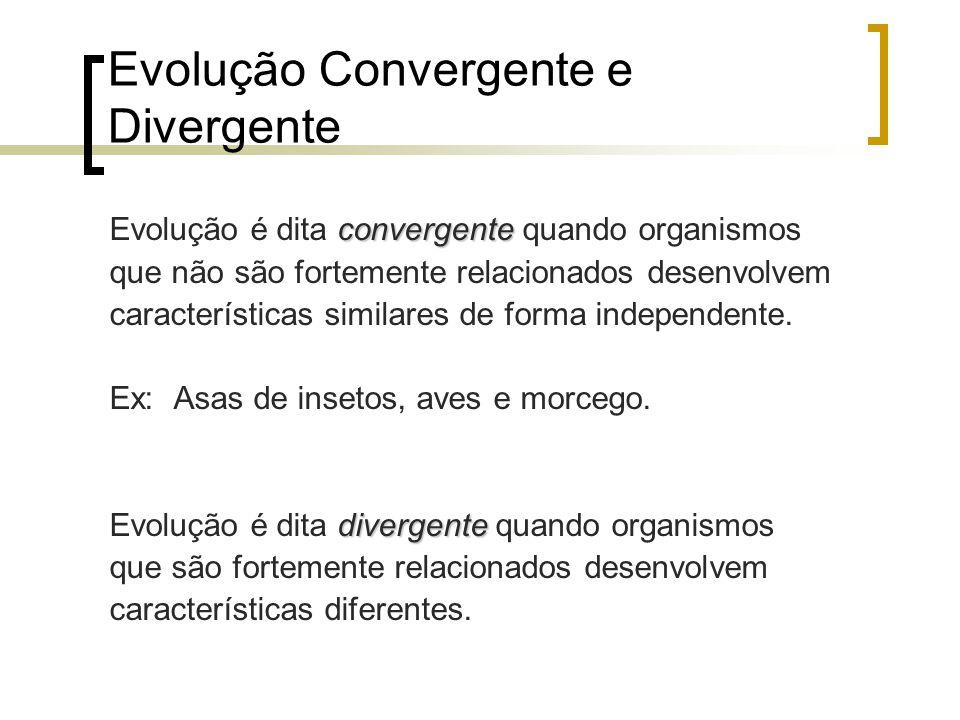 Evolução Convergente e Divergente convergente Evolução é dita convergente quando organismos que não são fortemente relacionados desenvolvem caracterís