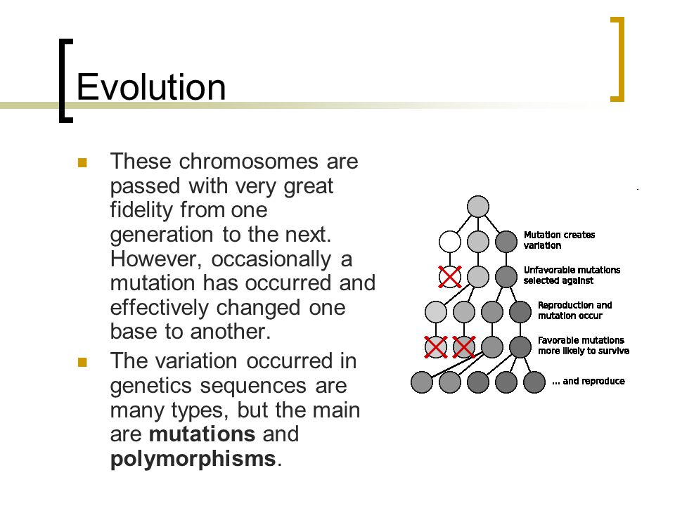 Evolution These chromosomes are passed with very great fidelity from one generation to the next.