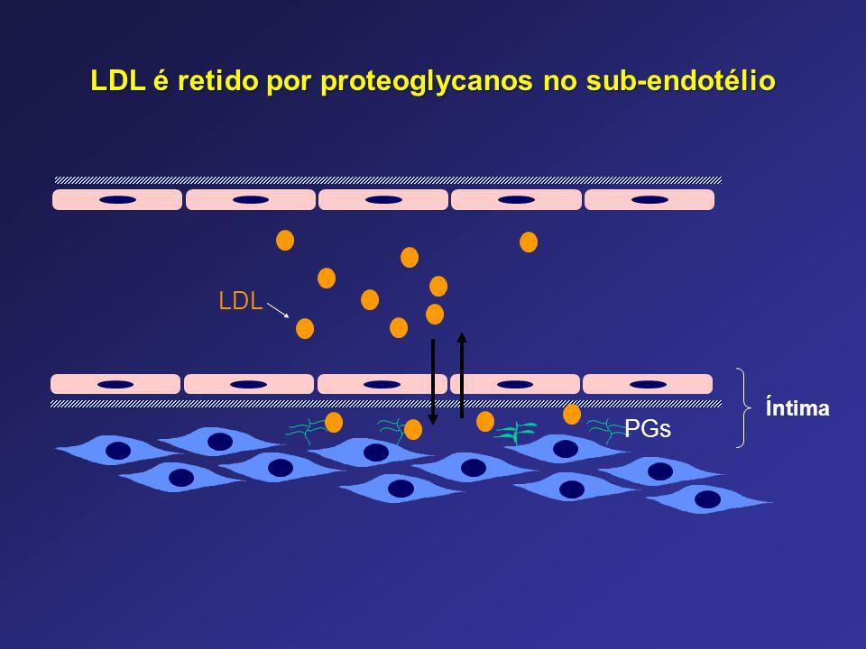 Íntima LDL PGs LDL é retido por proteoglycanos no sub-endotélio