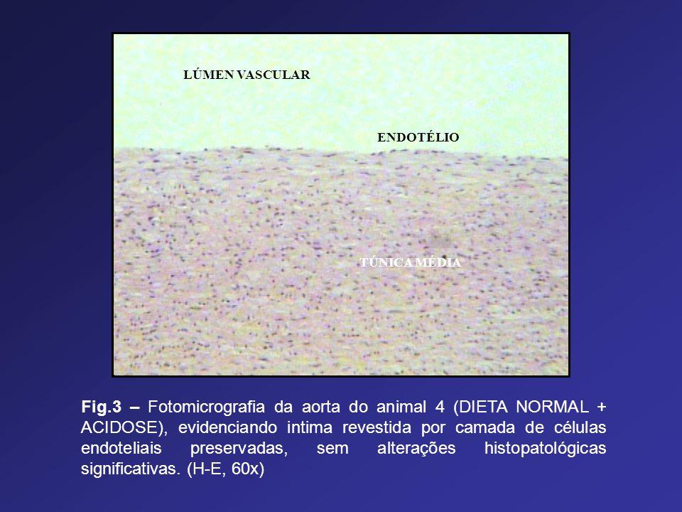 LÚMEN VASCULAR TÚNICA MÉDIA ENDOTÉLIO Fig.3 – Fotomicrografia da aorta do animal 4 (DIETA NORMAL + ACIDOSE), evidenciando intima revestida por camada
