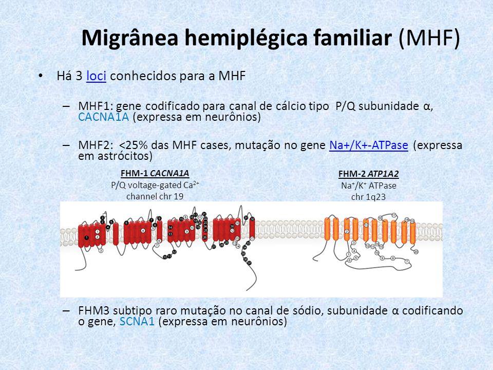 Migrânea hemiplégica familiar (MHF) Há 3 loci conhecidos para a MHFloci – MHF1: gene codificado para canal de cálcio tipo P/Q subunidade α, CACNA1A (expressa em neurônios) – MHF2: <25% das MHF cases, mutação no gene Na+/K+-ATPase (expressa em astrócitos)Na+/K+-ATPase – FHM3 subtipo raro mutação no canal de sódio, subunidade α codificando o gene, SCNA1 (expressa em neurônios) FHM-1 CACNA1A P/Q voltage-gated Ca 2+ channel chr 19 FHM-2 ATP1A2 Na + /K + ATPase chr 1q23