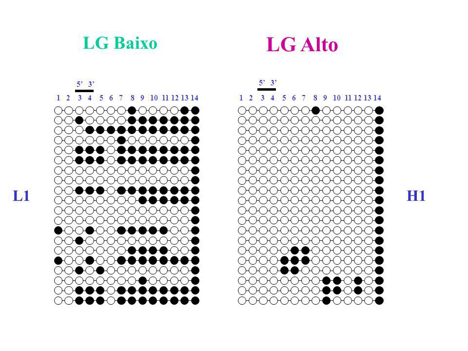 5' 3' LG Baixo LG Alto L1H1 1 2 3 4 5 6 7 8 9 10 11 12 13 14 5' 3' 1 2 3 4 5 6 7 8 9 10 11 12 13 14