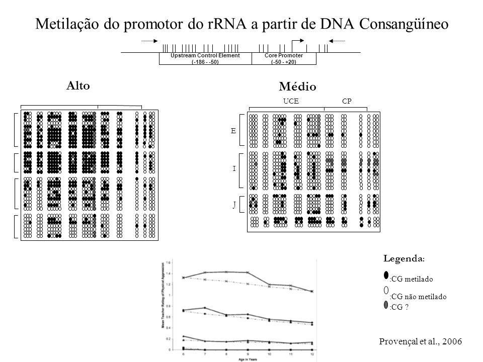 Metilação do promotor do rRNA a partir de DNA Consangüíneo Upstream Control Element (-186 - -50) Core Promoter (-50 - +20) Alto Legenda : :CG metilado :CG não metilado :CG .