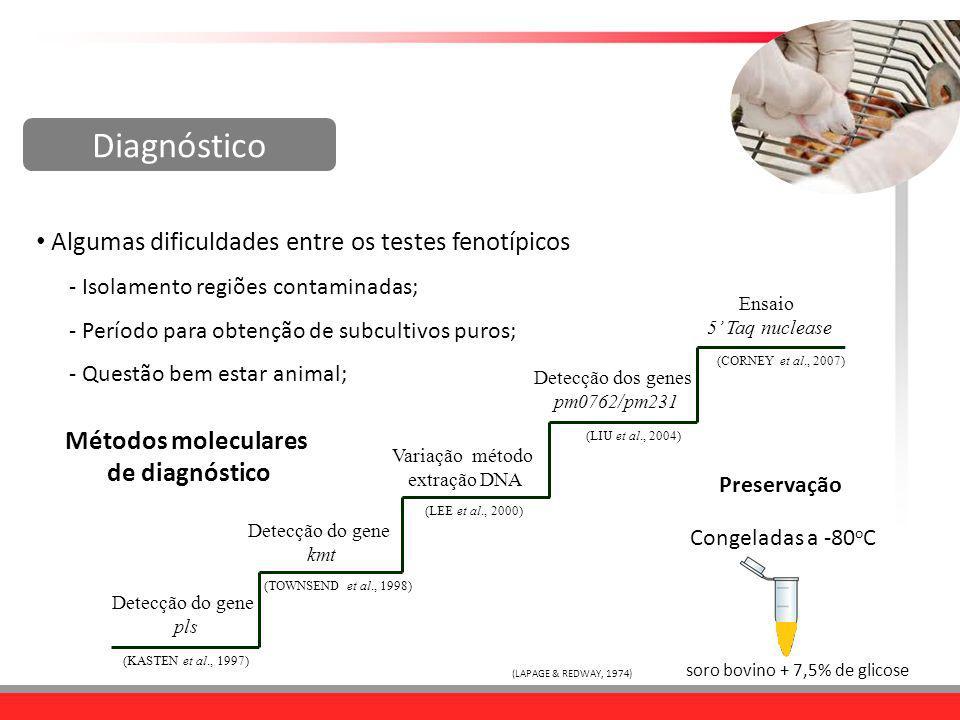 Algumas dificuldades entre os testes fenotípicos - Isolamento regiões contaminadas; - Período para obtenção de subcultivos puros; - Questão bem estar