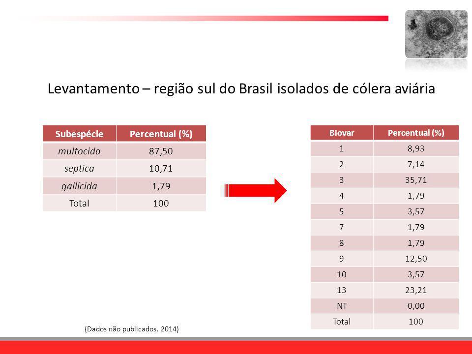 SubespéciePercentual (%) multocida87,50 septica10,71 gallicida1,79 Total100 (Dados não publicados, 2014) BiovarPercentual (%) 18,93 27,14 335,71 41,79