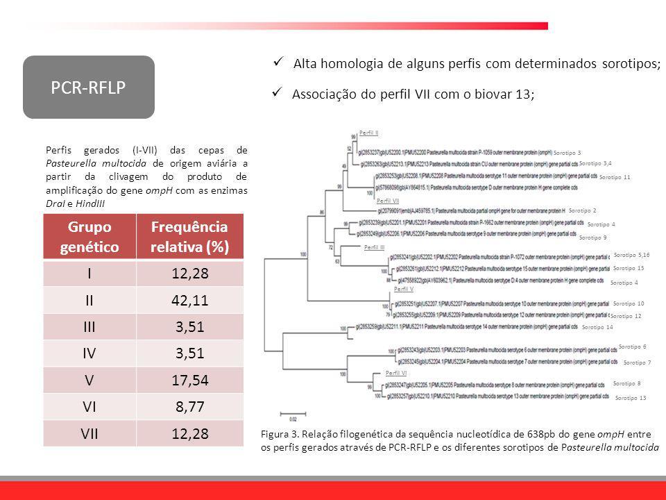 PCR-RFLP Grupo genético Frequência relativa (%) I12,28 II42,11 III3,51 IV3,51 V17,54 VI8,77 VII12,28 Perfis gerados (I-VII) das cepas de Pasteurella m