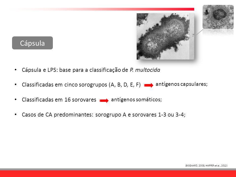 Cápsula e LPS: base para a classificação de P. multocida Classificadas em cinco sorogrupos (A, B, D, E, F) Classificadas em 16 sorovares Casos de CA p