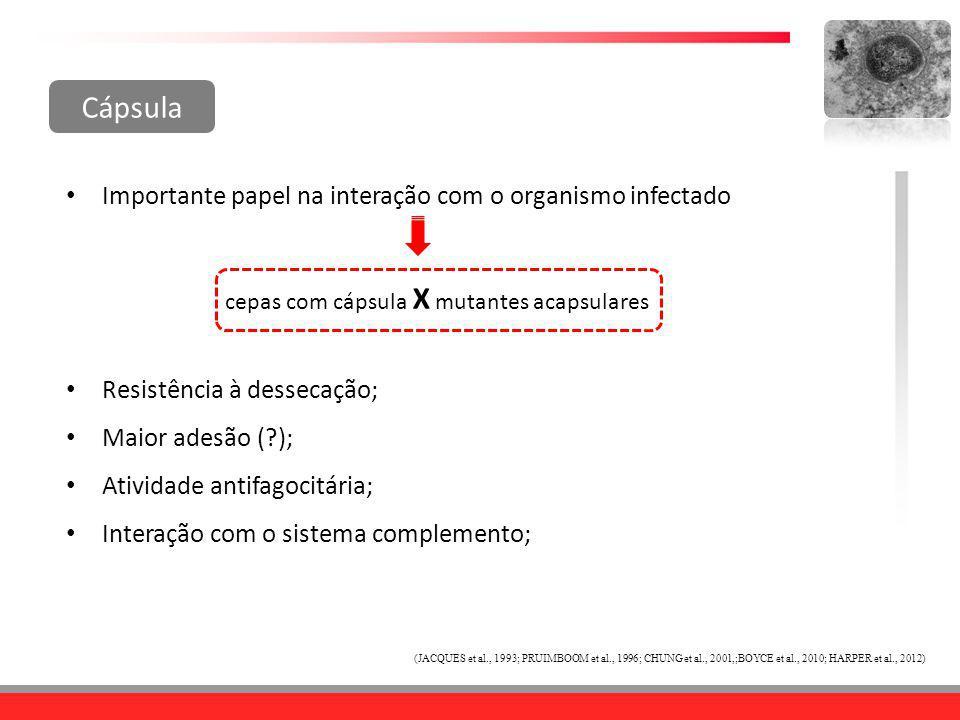 Cápsula Resistência à dessecação; Maior adesão (?); Atividade antifagocitária; Interação com o sistema complemento; Importante papel na interação com