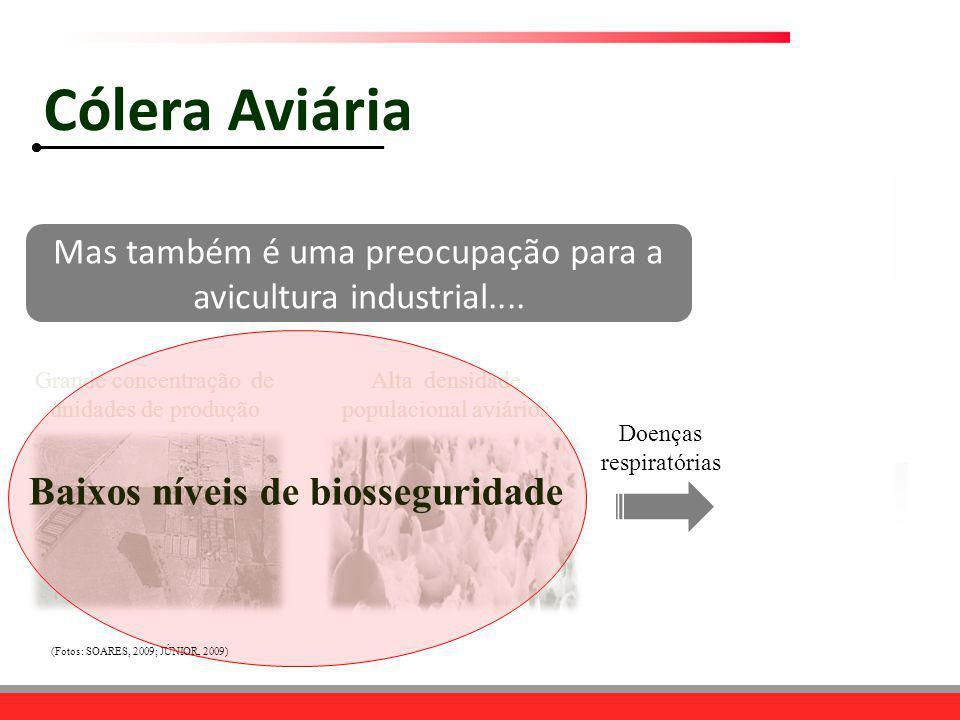 Doenças respiratórias Grande concentração de unidades de produção Alta densidade populacional aviários Baixos níveis de biosseguridade (Fotos: SOARES,