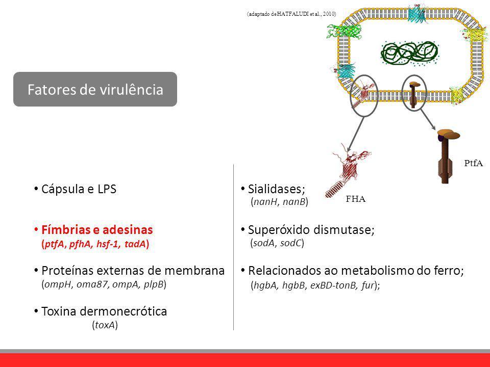 Cápsula e LPS Fímbrias e adesinas Proteínas externas de membrana Toxina dermonecrótica (ptfA, pfhA, hsf-1, tadA) (ompH, oma87, ompA, plpB) (toxA) (nan