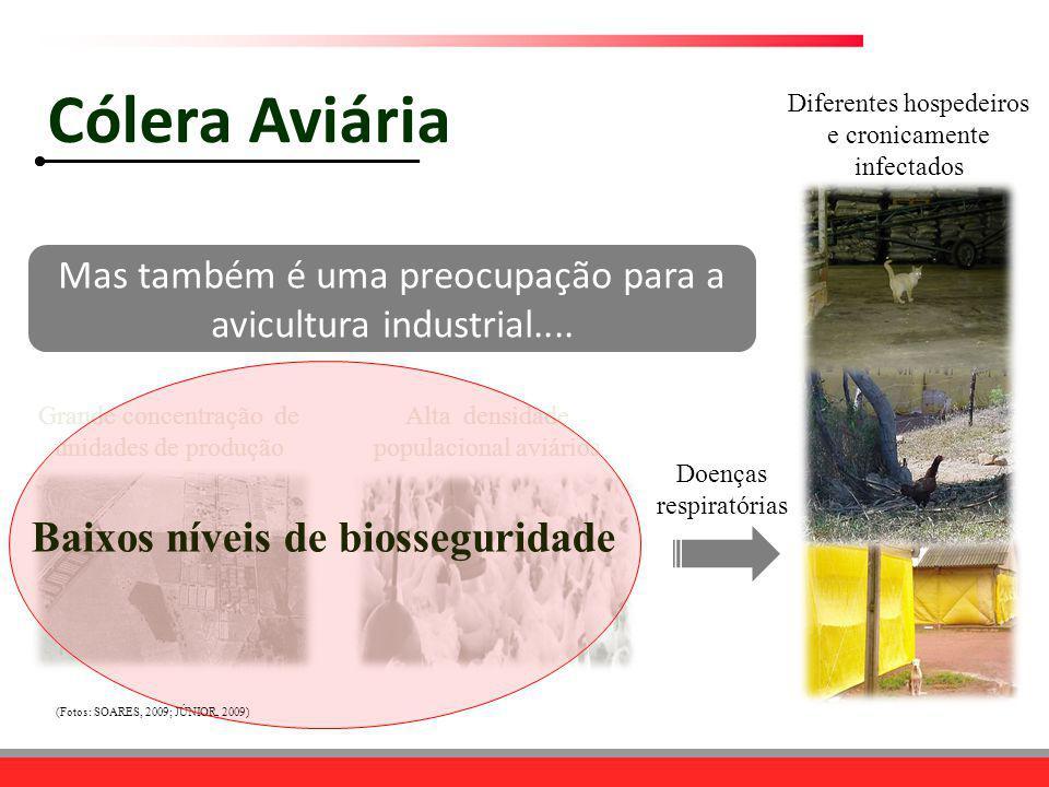 Doenças respiratórias Diferentes hospedeiros e cronicamente infectados Grande concentração de unidades de produção Alta densidade populacional aviário