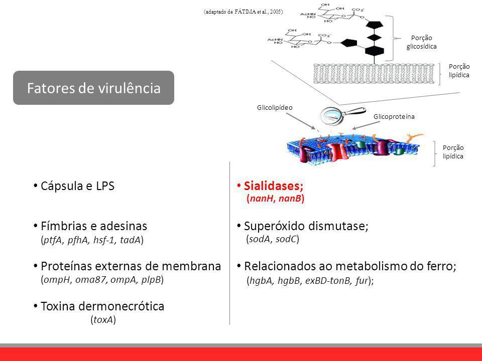 Sialidases; Superóxido dismutase; Relacionados ao metabolismo do ferro; Fatores de virulência Cápsula e LPS Fímbrias e adesinas Proteínas externas de