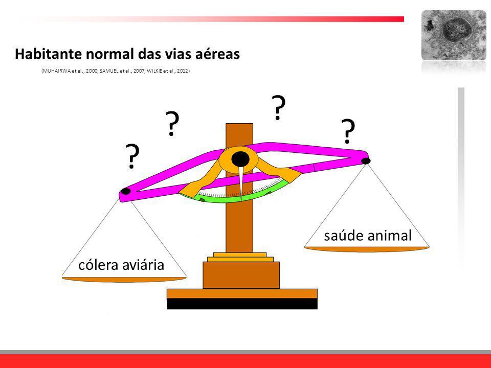 cólera aviária saúde animal Habitante normal das vias aéreas (MUHAIRWA et al., 2000; SAMUEL et al., 2007; WILKIE et al., 2012) ? ? ? ?