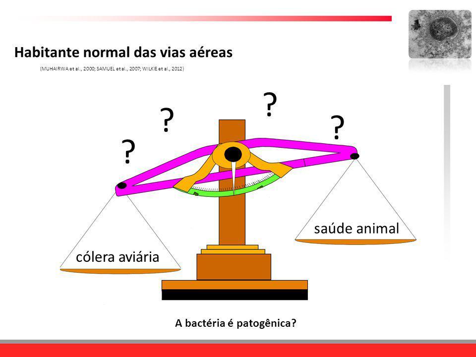 cólera aviária saúde animal Habitante normal das vias aéreas (MUHAIRWA et al., 2000; SAMUEL et al., 2007; WILKIE et al., 2012) ? ? ? ? A bactéria é pa