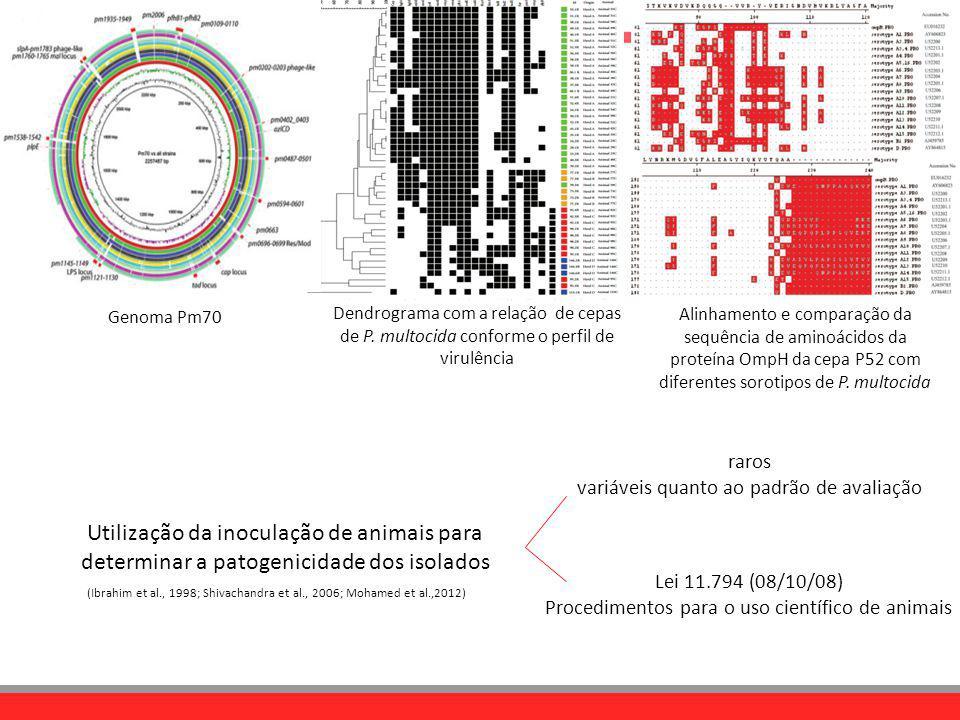 Dendrograma com a relação de cepas de P. multocida conforme o perfil de virulência Genoma Pm70 Alinhamento e comparação da sequência de aminoácidos da