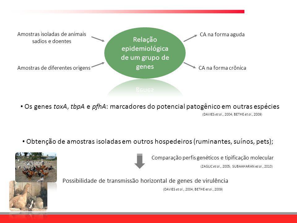 Obtenção de amostras isoladas em outros hospedeiros (ruminantes, suínos, pets); Possibilidade de transmissão horizontal de genes de virulência (DAVIES
