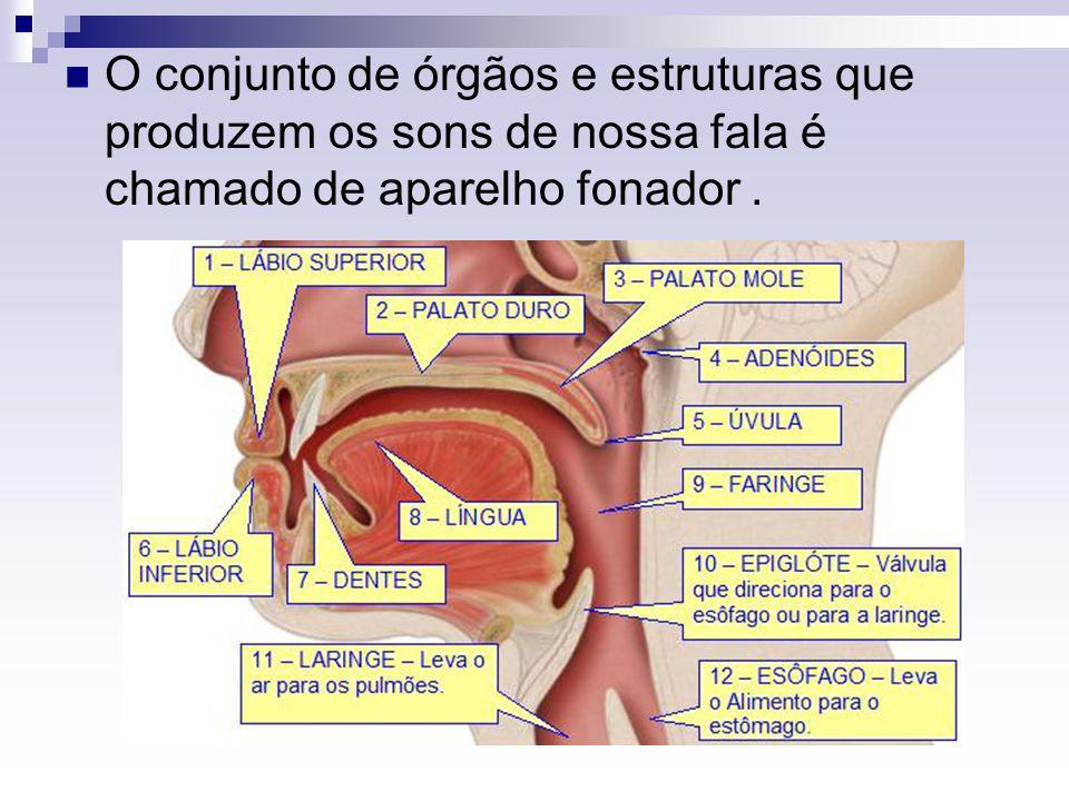 O conjunto de órgãos e estruturas que produzem os sons de nossa fala é chamado de aparelho fonador.