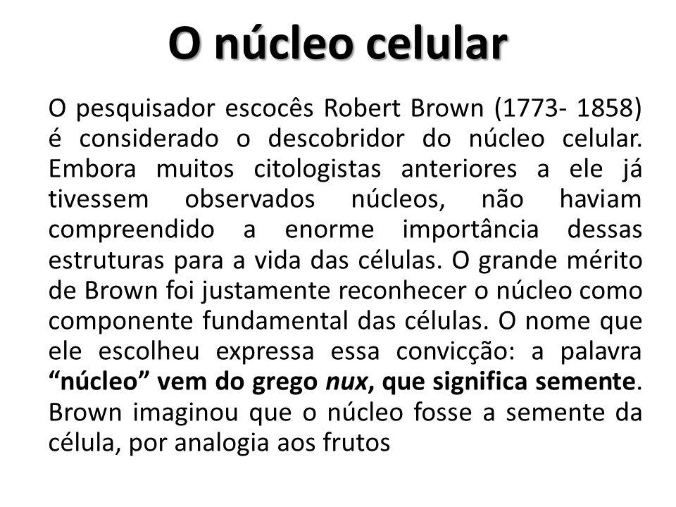 O núcleo celular O pesquisador escocês Robert Brown (1773- 1858) é considerado o descobridor do núcleo celular. Embora muitos citologistas anteriores