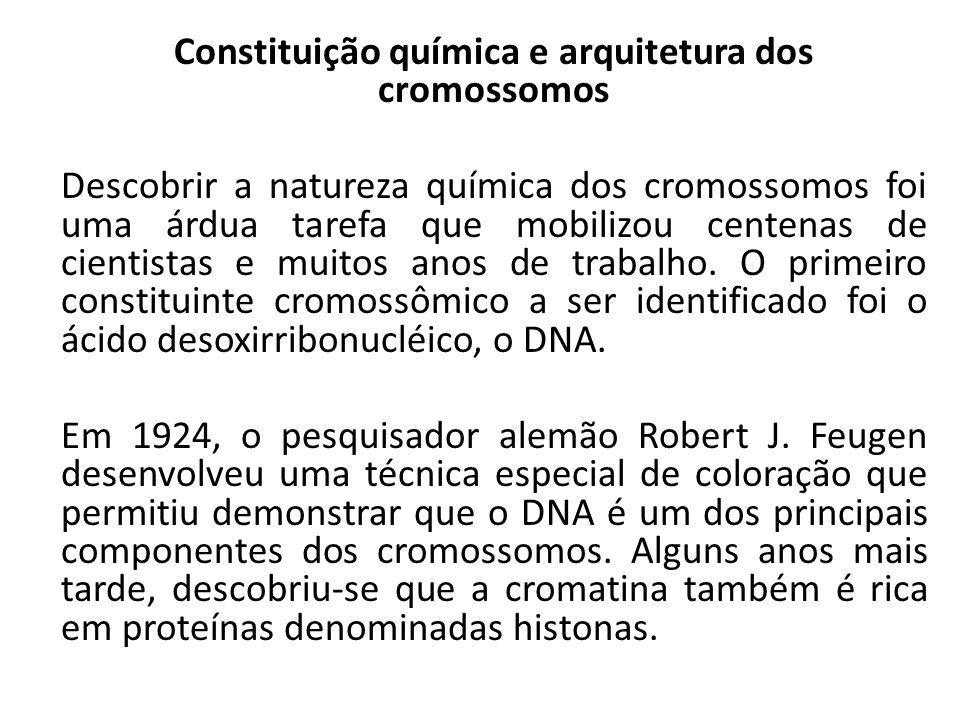 Constituição química e arquitetura dos cromossomos Descobrir a natureza química dos cromossomos foi uma árdua tarefa que mobilizou centenas de cientis