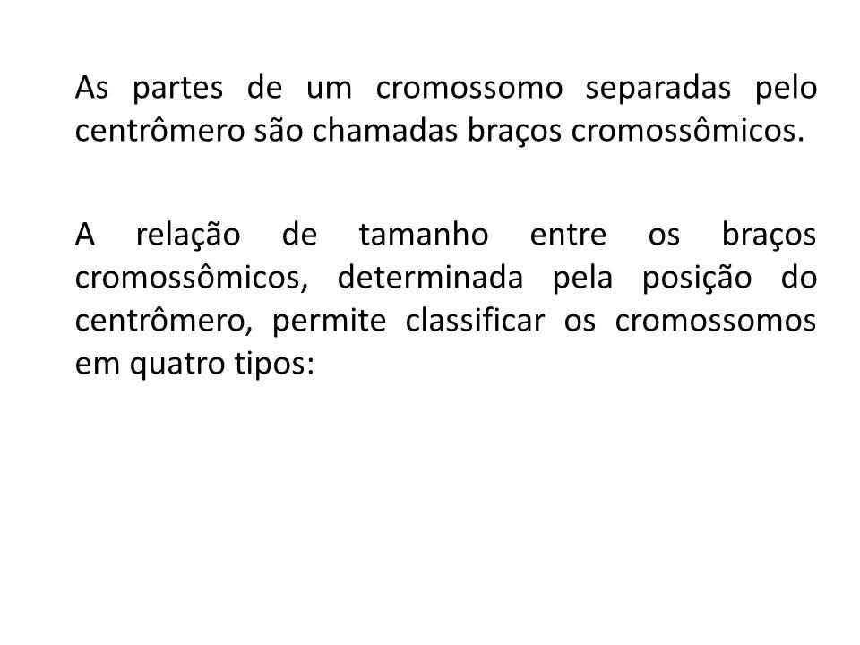 As partes de um cromossomo separadas pelo centrômero são chamadas braços cromossômicos. A relação de tamanho entre os braços cromossômicos, determinad