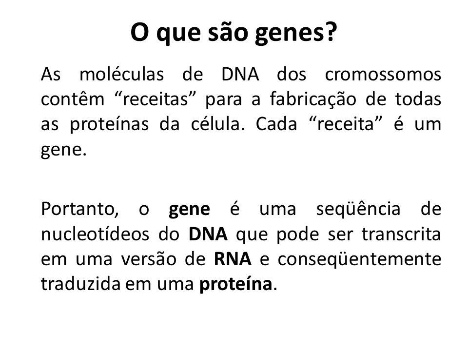 """O que são genes? As moléculas de DNA dos cromossomos contêm """"receitas"""" para a fabricação de todas as proteínas da célula. Cada """"receita"""" é um gene. Po"""