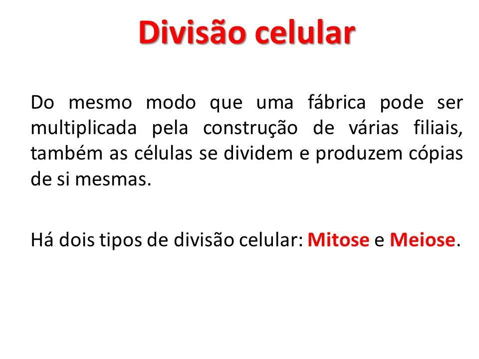 Divisão celular Do mesmo modo que uma fábrica pode ser multiplicada pela construção de várias filiais, também as células se dividem e produzem cópias