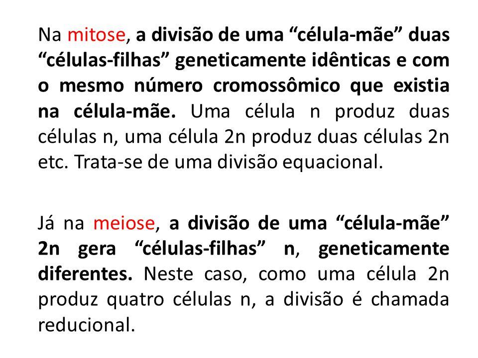 """Na mitose, a divisão de uma """"célula-mãe"""" duas """"células-filhas"""" geneticamente idênticas e com o mesmo número cromossômico que existia na célula-mãe. Um"""