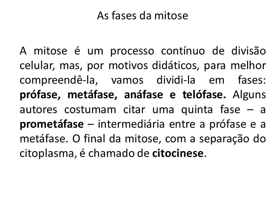 As fases da mitose A mitose é um processo contínuo de divisão celular, mas, por motivos didáticos, para melhor compreendê-la, vamos dividi-la em fases