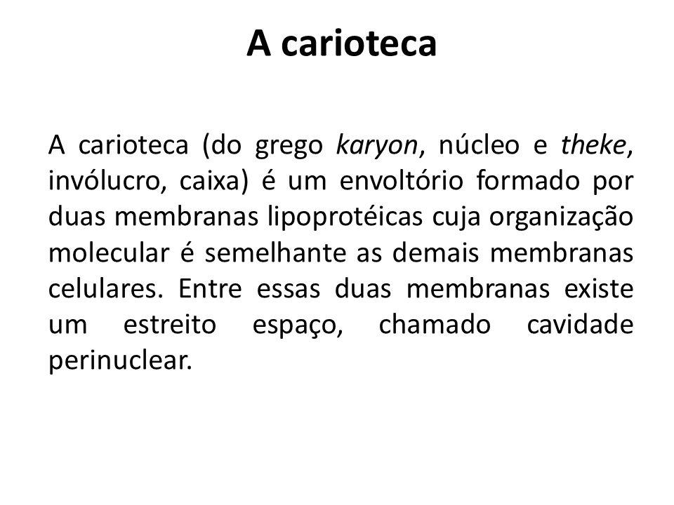 A carioteca A carioteca (do grego karyon, núcleo e theke, invólucro, caixa) é um envoltório formado por duas membranas lipoprotéicas cuja organização