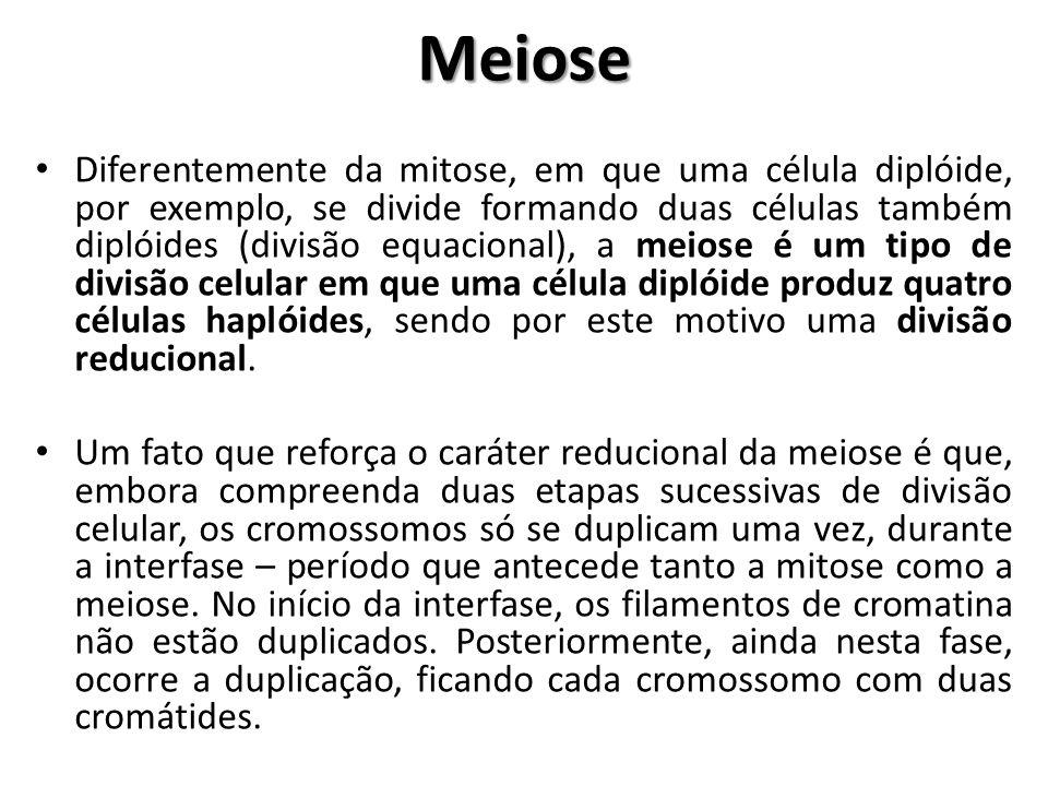 Meiose Diferentemente da mitose, em que uma célula diplóide, por exemplo, se divide formando duas células também diplóides (divisão equacional), a mei