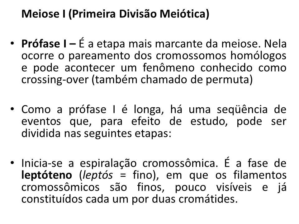 Meiose I (Primeira Divisão Meiótica) Prófase I – É a etapa mais marcante da meiose. Nela ocorre o pareamento dos cromossomos homólogos e pode acontece