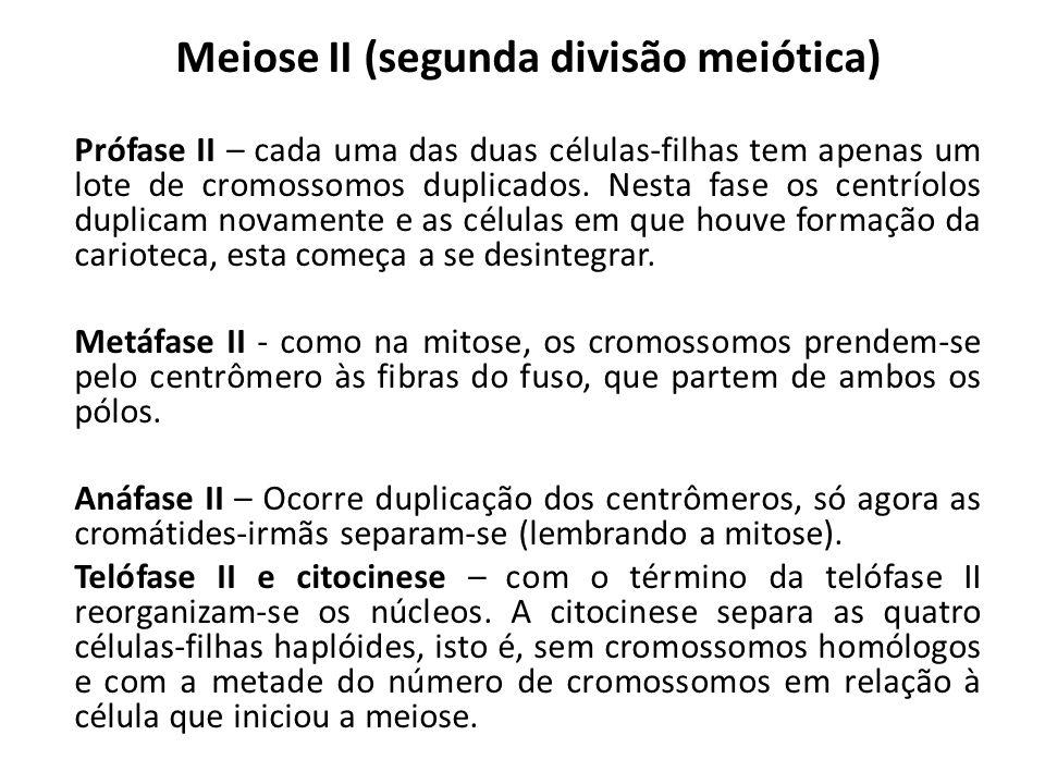 Meiose II (segunda divisão meiótica) Prófase II – cada uma das duas células-filhas tem apenas um lote de cromossomos duplicados. Nesta fase os centrío
