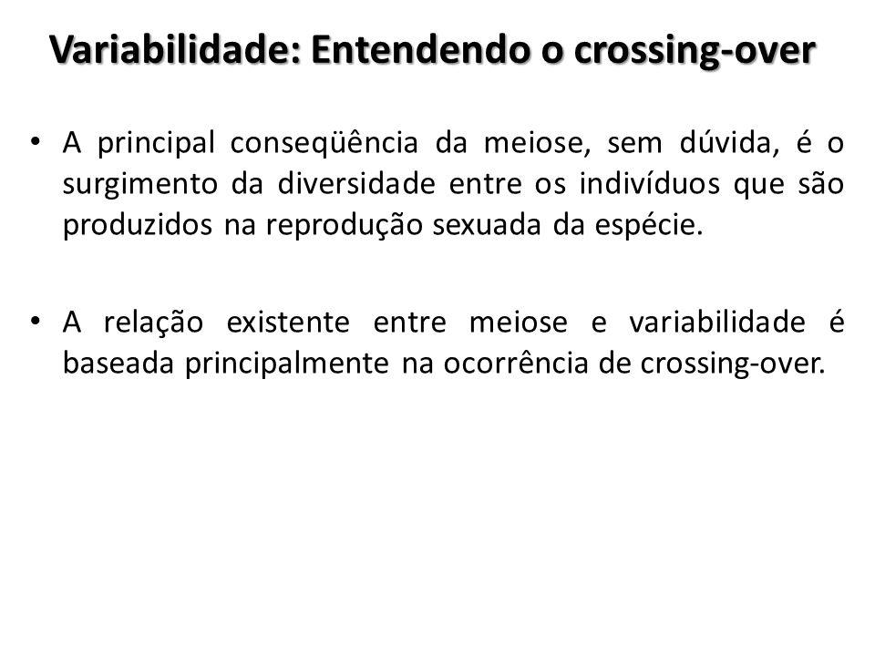 Variabilidade: Entendendo o crossing-over A principal conseqüência da meiose, sem dúvida, é o surgimento da diversidade entre os indivíduos que são pr