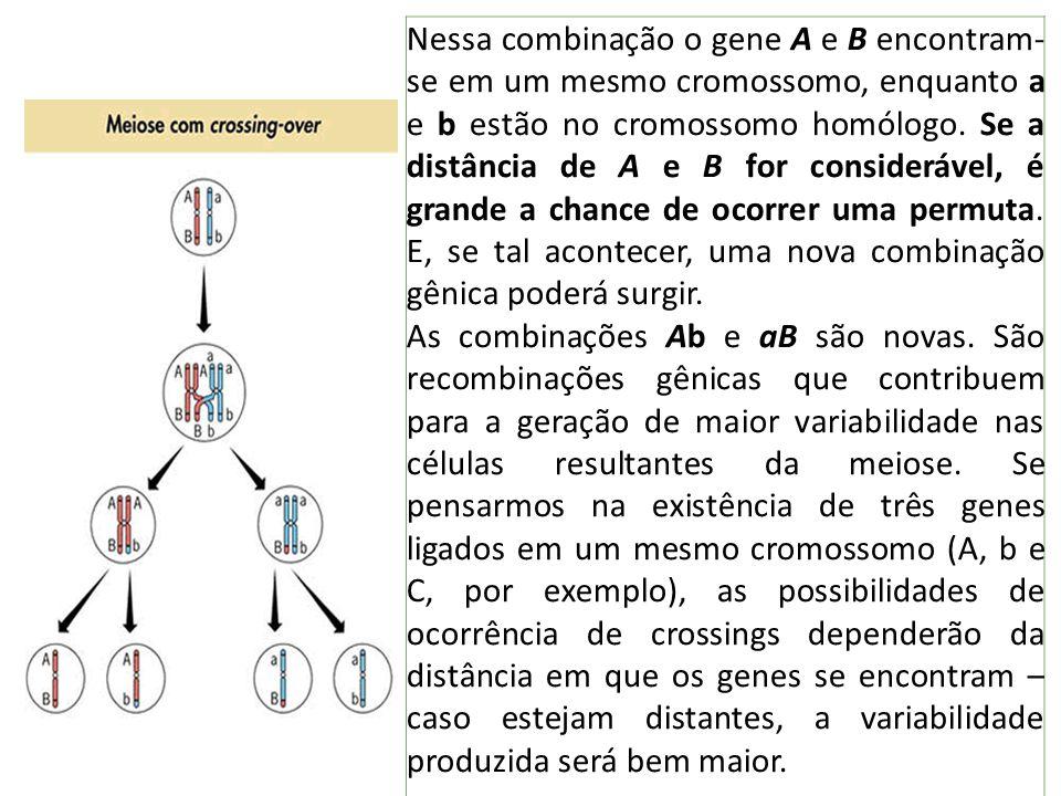 Nessa combinação o gene A e B encontram- se em um mesmo cromossomo, enquanto a e b estão no cromossomo homólogo. Se a distância de A e B for considerá