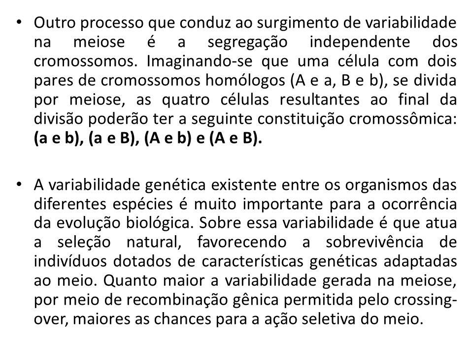 Outro processo que conduz ao surgimento de variabilidade na meiose é a segregação independente dos cromossomos. Imaginando-se que uma célula com dois
