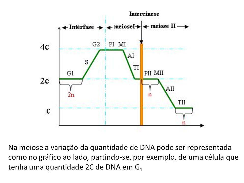 Na meiose a variação da quantidade de DNA pode ser representada como no gráfico ao lado, partindo-se, por exemplo, de uma célula que tenha uma quantid