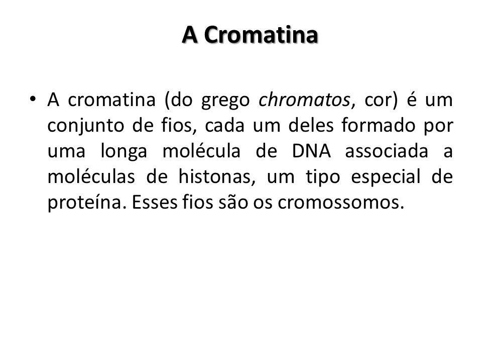 A Cromatina A cromatina (do grego chromatos, cor) é um conjunto de fios, cada um deles formado por uma longa molécula de DNA associada a moléculas de