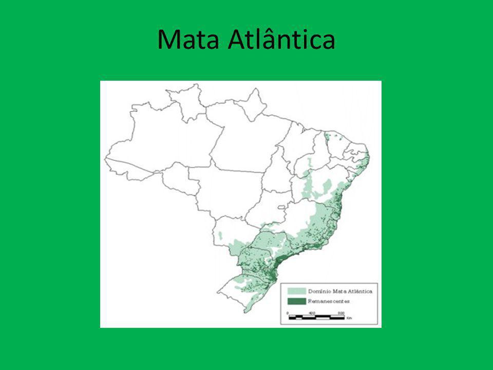 Aspectos gerais Área total original: aproximadamente 1,3 milhão de km 2.