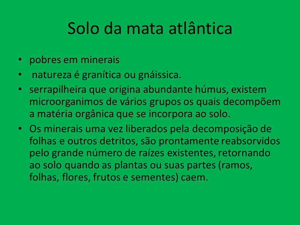 Solo da mata atlântica pobres em minerais natureza é granítica ou gnáissica. serrapilheira que origina abundante húmus, existem microorganimos de vári